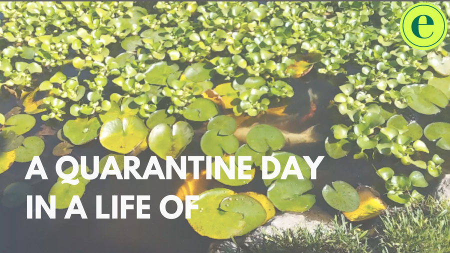 A quarantine day in a life of a student